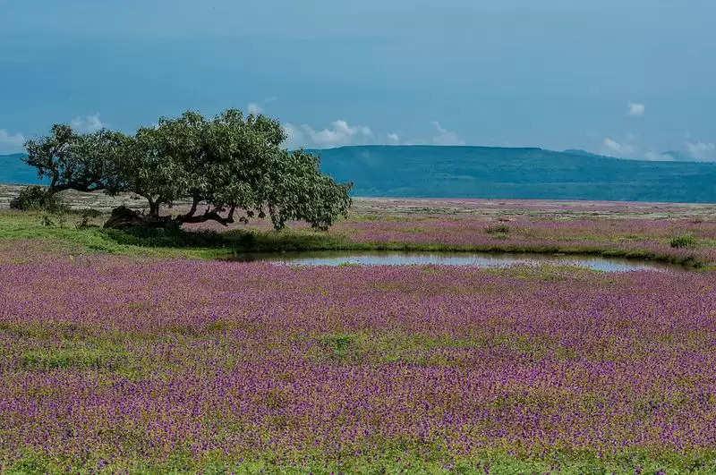 kaas valley